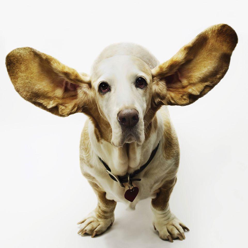 Ascultarea activă în negociere