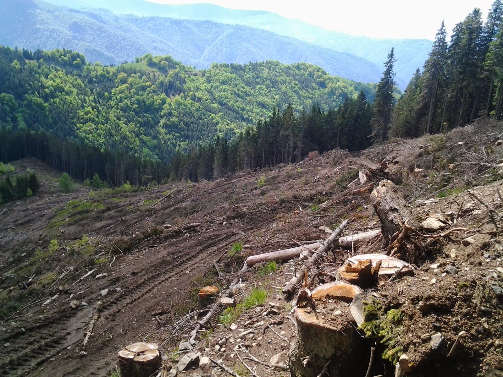 STOP despăduririlor abuzive! (SIBIU)