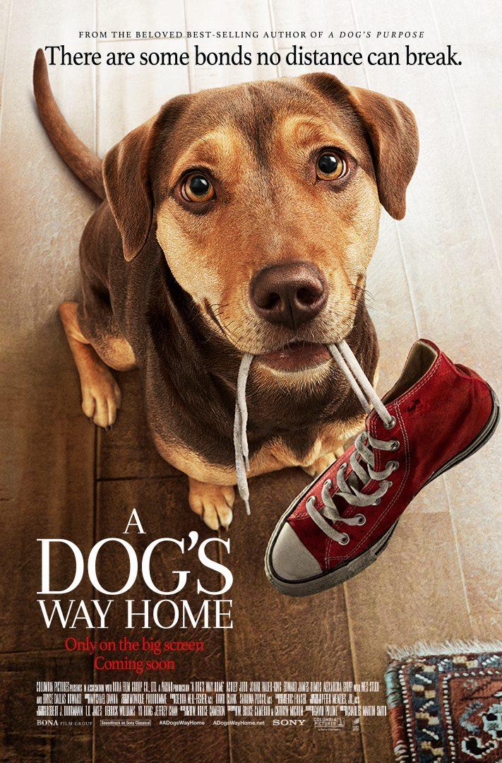 A Dog's Way Home (Drumul unui câine către casă) - 2D Dublat RO